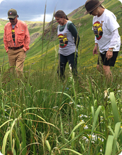 People observing healthy native grassland