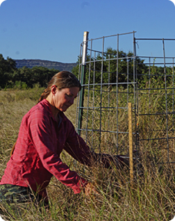 Woman monitoring pasture health by measuring forage height outside grazing exclosure